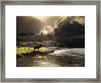 Elk In Sinkyone Wilderness Framed Print by Leland D Howard