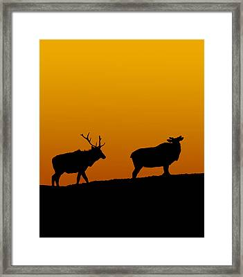 Elk In The Sunset Framed Print