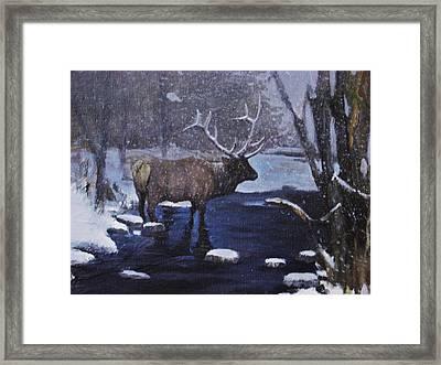 Elk In The Wilderness Framed Print