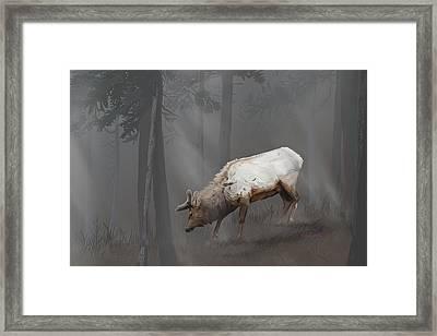 Elk In Velvet Fog Framed Print