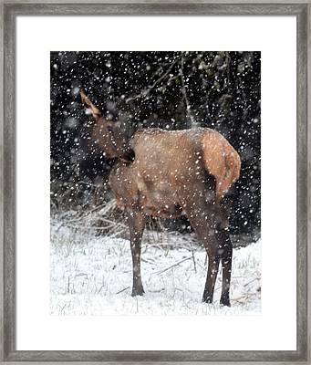 Elk Framed Print by Jeri lyn Chevalier