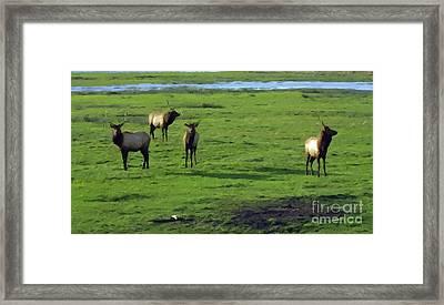 Elk  Framed Print by Larry Stolle