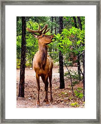 Framed Print featuring the photograph Elk - Mather Grand Canyon by Bob and Nadine Johnston