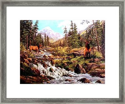 Elk Meadows Framed Print by W  Scott Fenton