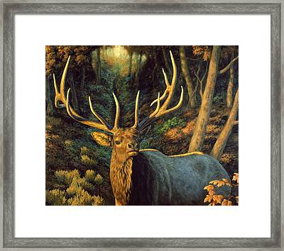 Elk Painting - Autumn Majesty Framed Print by Crista Forest