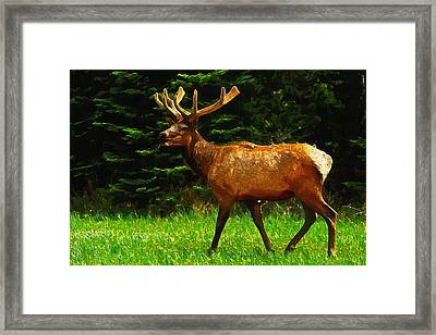Elk Portrait Framed Print by Ayse Deniz