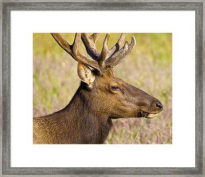 Framed Print featuring the photograph Elk Profile by Todd Kreuter