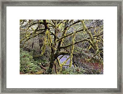 Elk River Guardian Framed Print