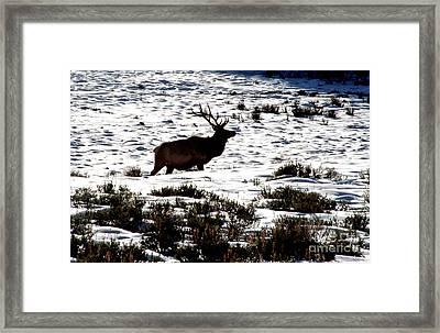 Elk Silhouette Framed Print by Sharon Elliott