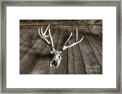 Elk Skull Bannack Montana Framed Print by Bob Christopher