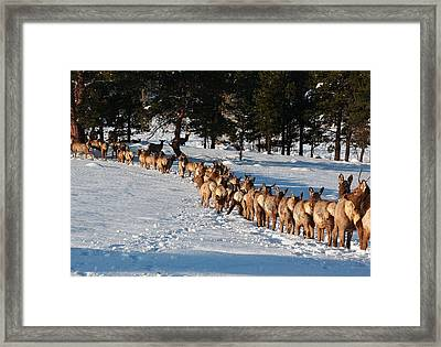 Framed Print featuring the photograph Elk Train by Steven Reed