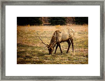 Elkin John Framed Print by Jon Burch Photography
