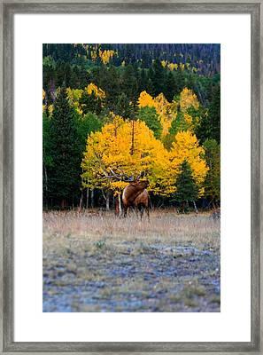 Elks Last Call Framed Print by Rebecca Adams