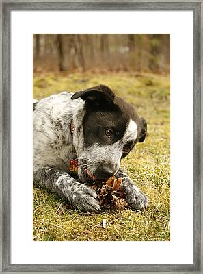 Ellie Vs. The Pine Cone Framed Print by Kristia Adams