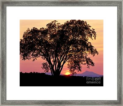 Framed Print featuring the photograph Elm At Sunset by Alan L Graham