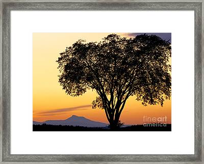 Elm At Twilight Framed Print