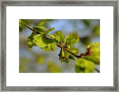 Elm Entary My Dear Framed Print by Amber Whiting Bradley