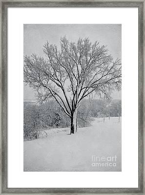 Elm In Snow Framed Print