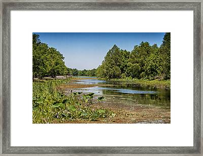 Framed Print featuring the photograph Elm Lake At Brazos Bend In Texas by Zoe Ferrie