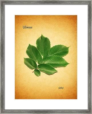 Elm Framed Print by Mark Rogan