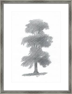Elm Tree Drawing Number One Framed Print by Alan Daysh