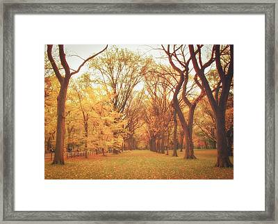 Elm Trees - Autumn - Central Park Framed Print by Vivienne Gucwa