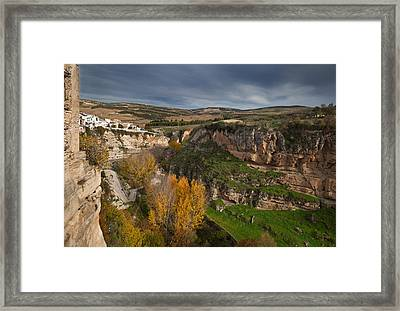 Elm Trees In Autumn In The Tajo Or Framed Print by Panoramic Images