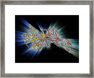 Elongation Factor Tu And Trna Framed Print by Laguna Design