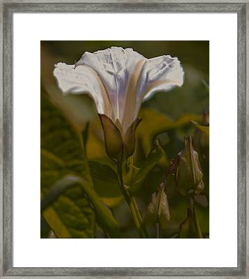 Framed Print featuring the photograph Elsewhere by Leif Sohlman