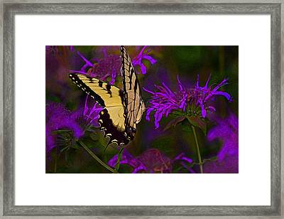 Elusive Butterfly Of Love Framed Print by Mamie Thornbrue