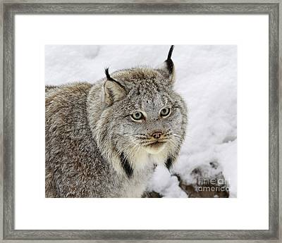 Elusive By Nature Framed Print by Inspired Nature Photography Fine Art Photography
