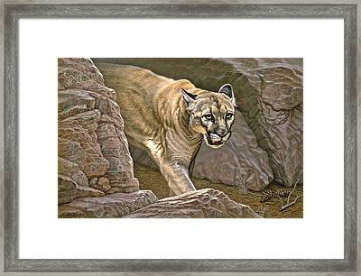 Elusive Hunter - Cougar Framed Print by Paul Krapf