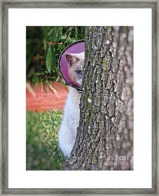 Embarrassed Kitty - Cat Hiding Behind Tree Framed Print