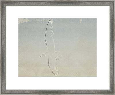 Embossed Gull Framed Print