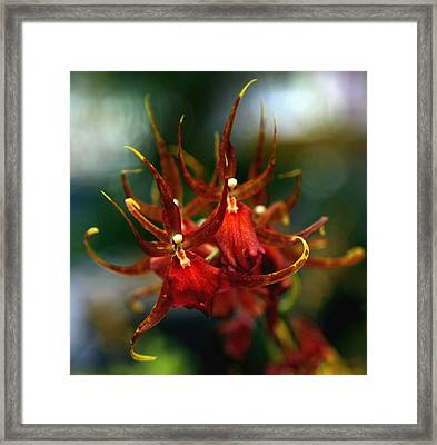Embraced By An Orchid Framed Print