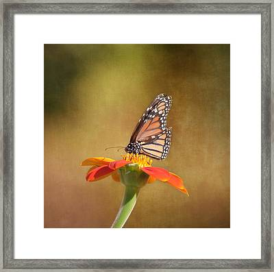 Embracing Nature Framed Print by Kim Hojnacki