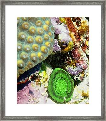 Emerald Artichoke Coral Framed Print