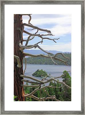 Emerald Bay Through Cedar Framed Print by Mickey Hatt