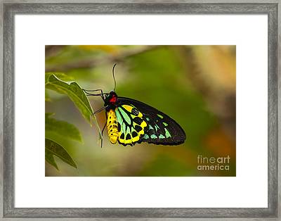 Emerald Beauty Framed Print by Mike  Dawson