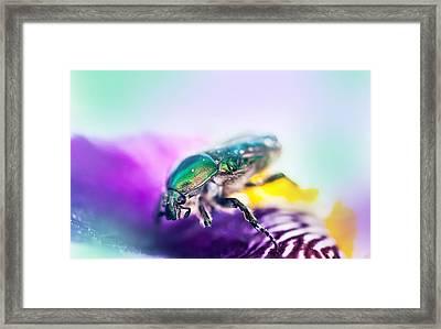 Emerald Beetle On Purple Iris. Macro Iris Series Framed Print
