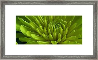 Emerald Dahlia Framed Print