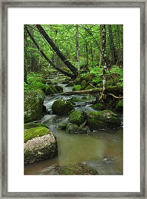 Emerald Forest Framed Print