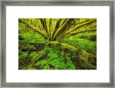 Emerald Hoh Framed Print by Joseph Rossbach