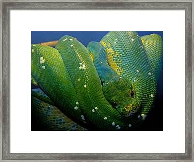 Emerald Trouble Framed Print by Susan Duda