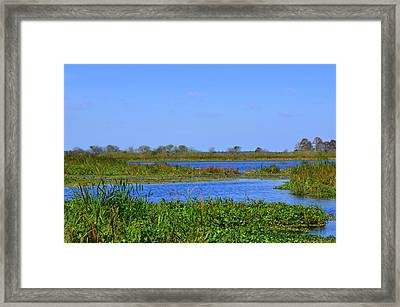 Emeralda Marsh IIi Framed Print