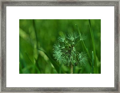 Emeralds Framed Print by Anna  McAlister