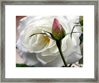 Framed Print featuring the photograph Emergence by Deb Halloran
