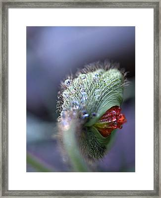 Framed Print featuring the photograph Emergence by Joe Schofield