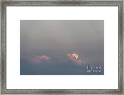 Emergence Framed Print by Sandra Bronstein