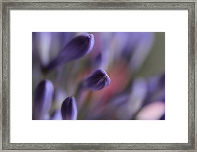 Emergence - The Question Framed Print by Connie Handscomb